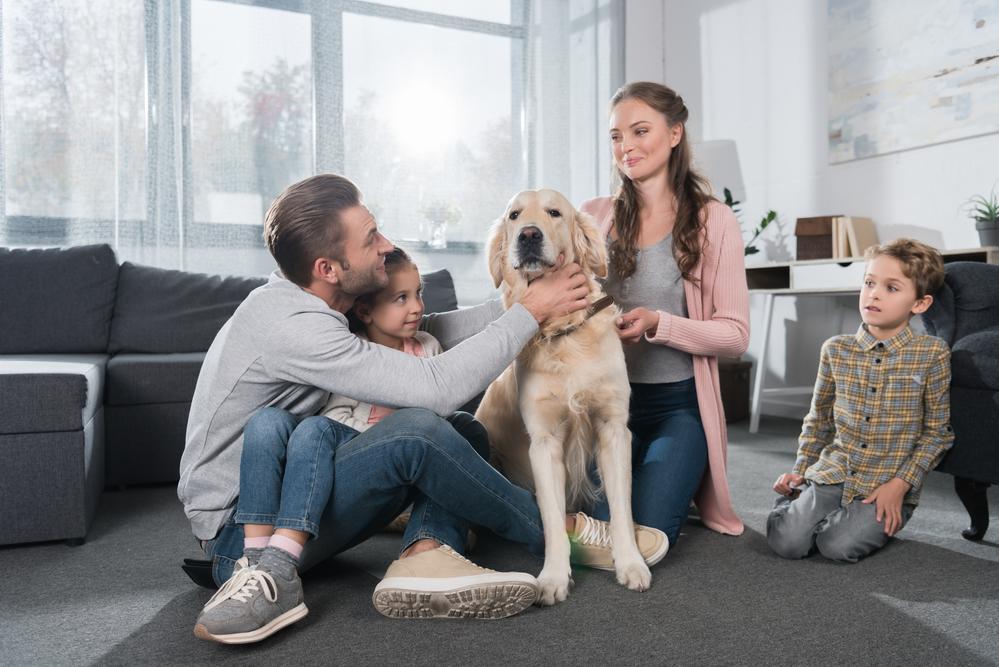 Hundehaftpflicht – brauche ich diese Versicherung für meinen Hund wirklich?