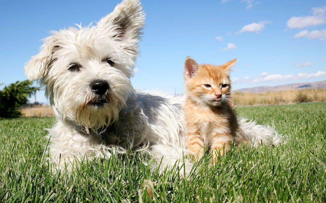 Wenn Hund und Katze zusammenleben